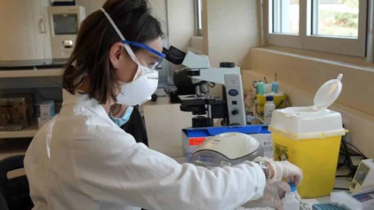"""Gli animalisti bloccano la ricerca. Il biologo: """"Liberiamola subito"""""""