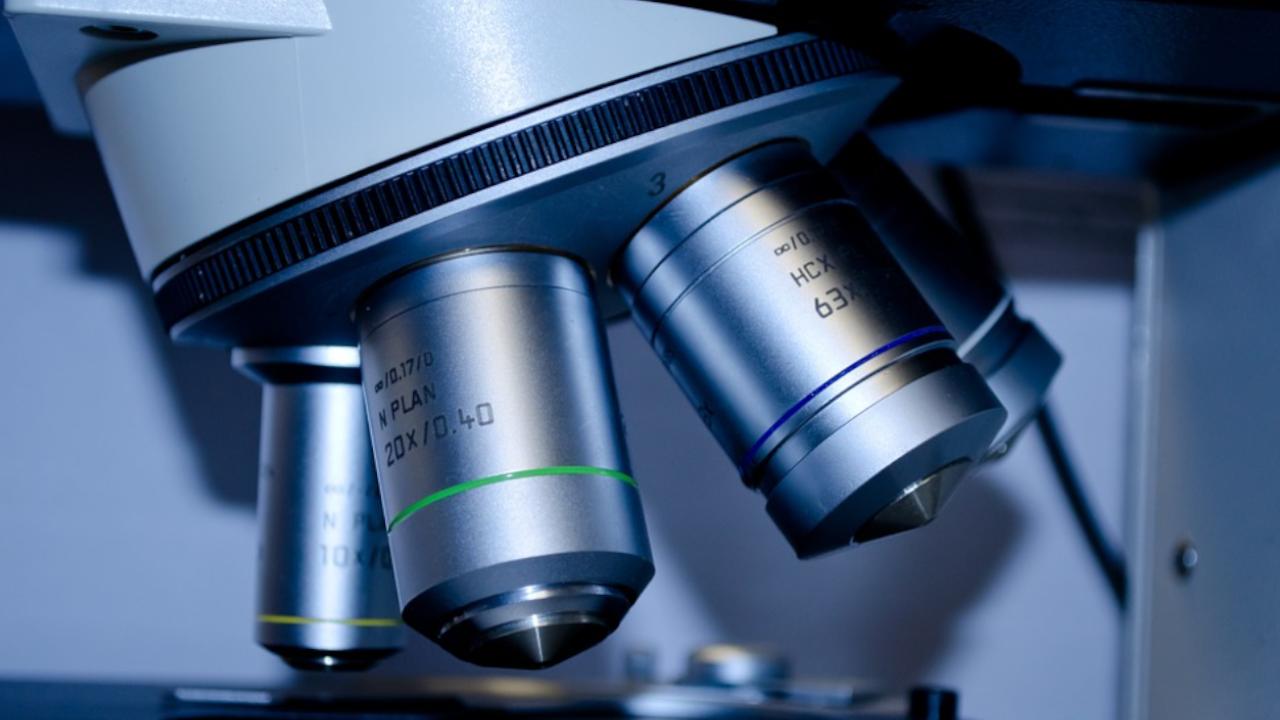 Verso terapia per tumori allo stomaco grazie alla ricerca sui topi