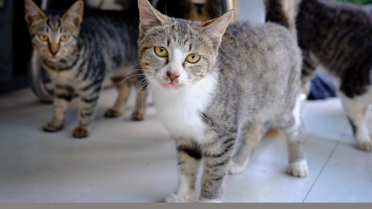 Fake news sui gatti e su Telethon scoperta da un vero giornalista