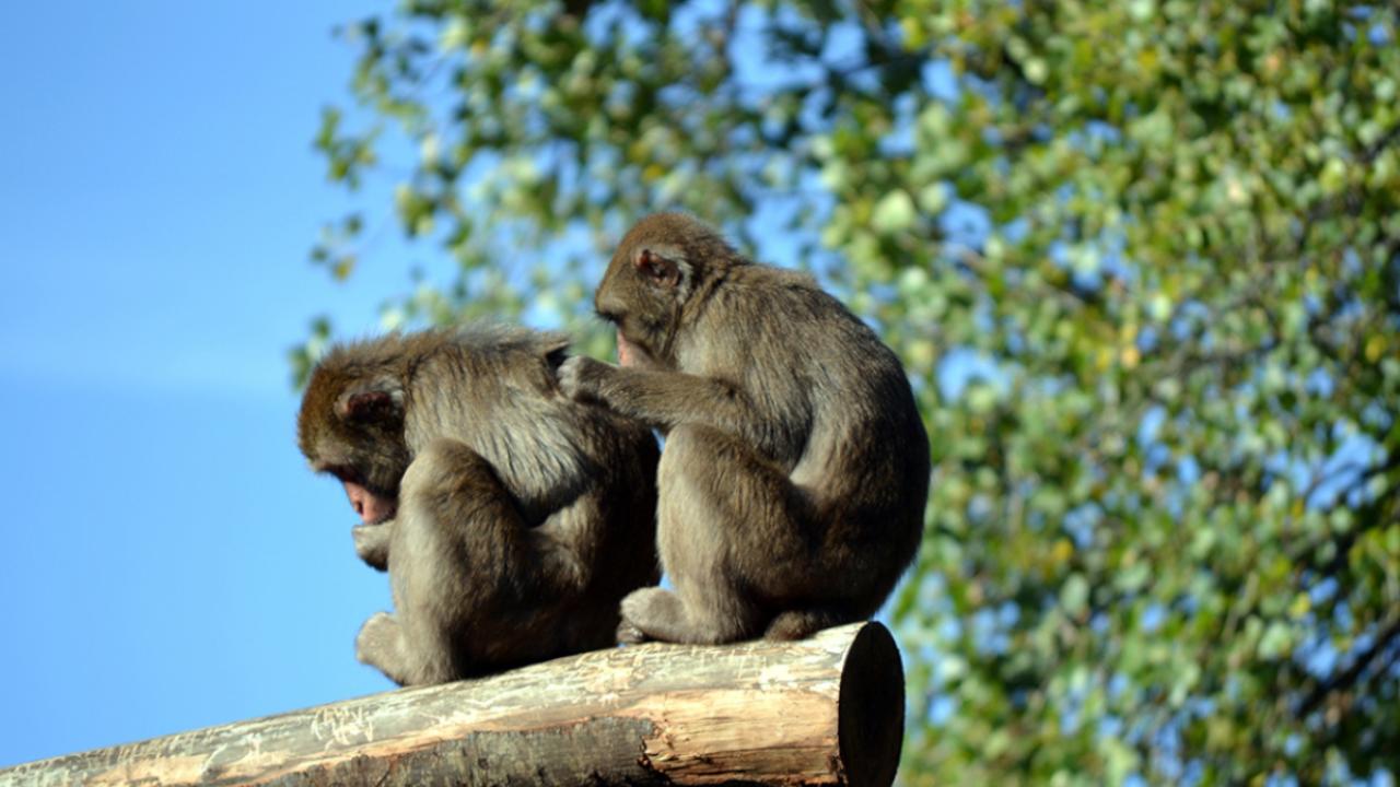 Sperimentazione animale e proteste: facciamo un pò di chiarezza!