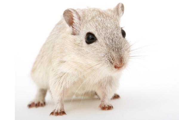 sperimentazione sui topi
